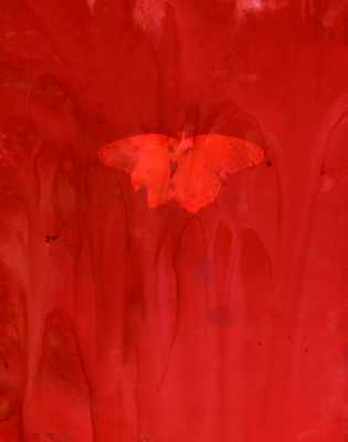 Lumen - Red Butterfly