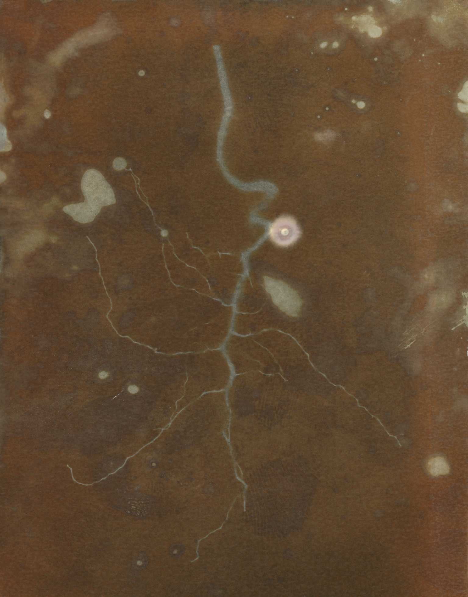 Lumen - Root