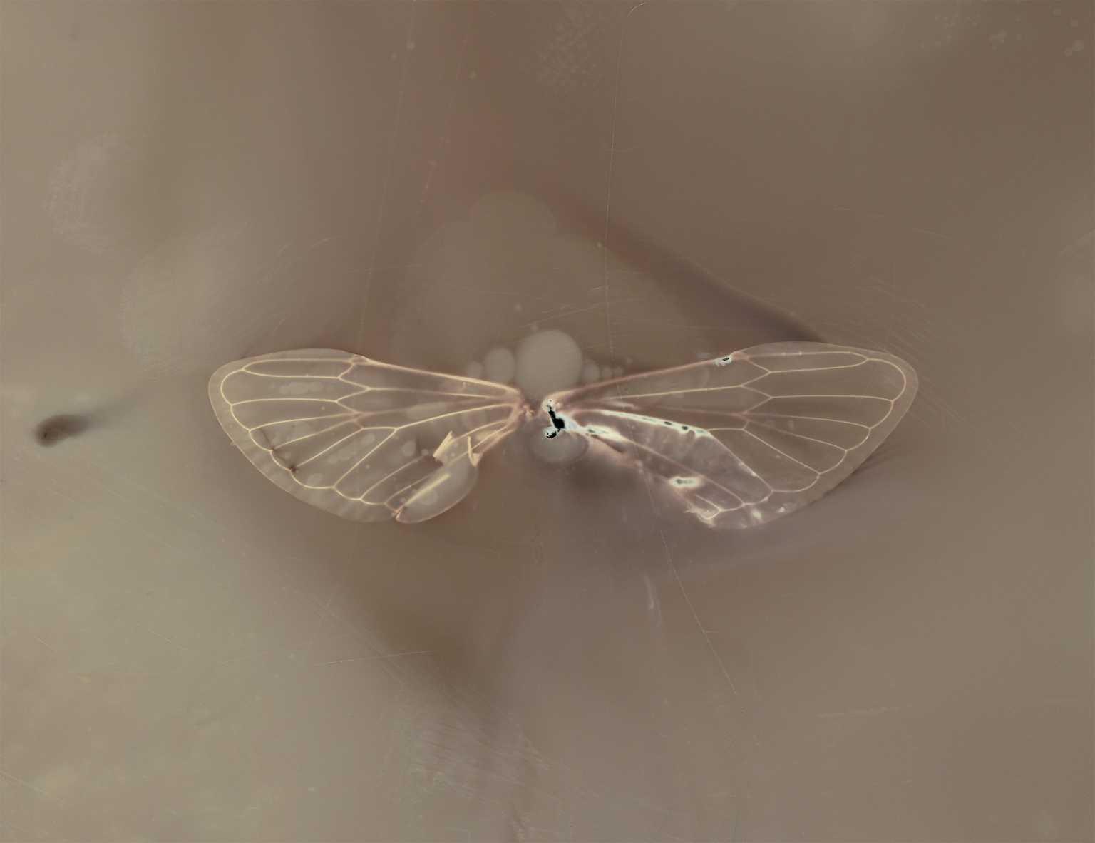 Lumen - Wings