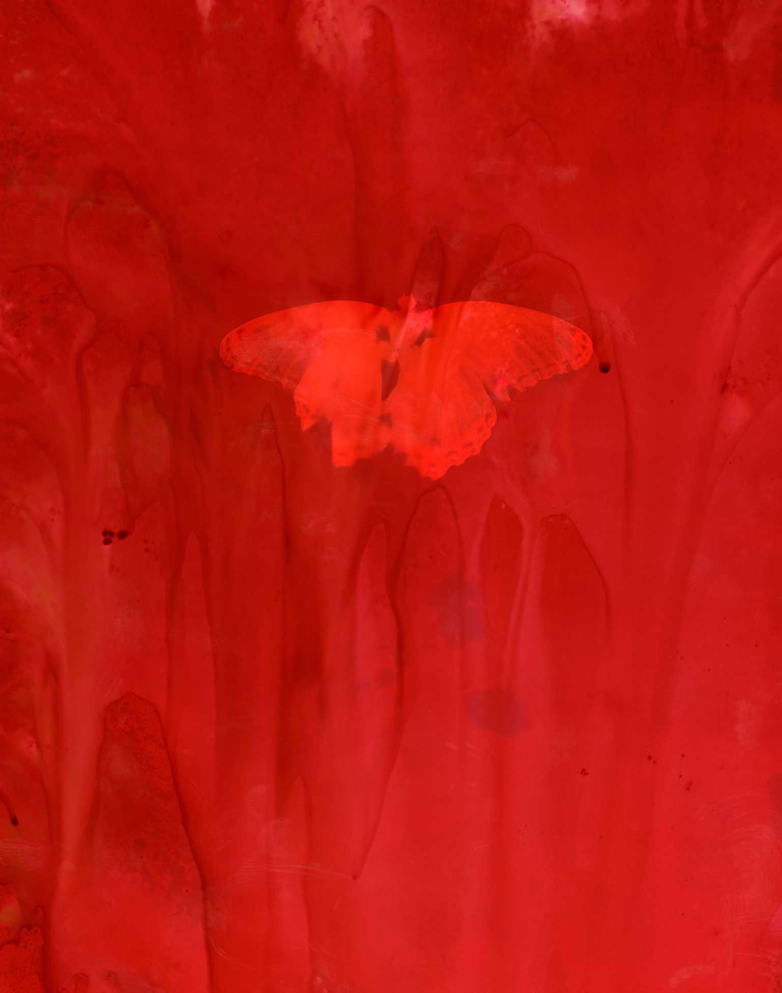 Lumen - Red Butterfly